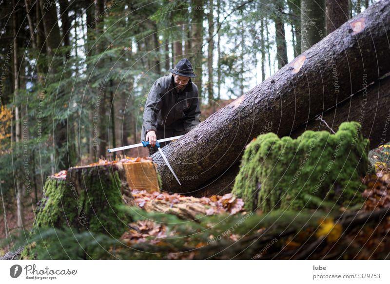 Waldarbeiter Arbeit & Erwerbstätigkeit Arbeitsplatz Landwirtschaft Forstwirtschaft Natur Landschaft Tier Baum Förster Baum fällen Waldaufseher Nadelwald