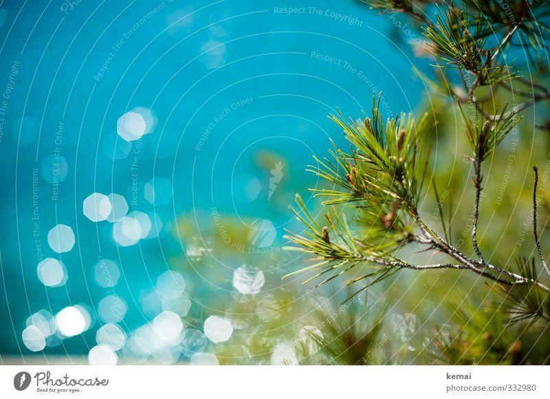 Sonnenglitzern Umwelt Natur Landschaft Pflanze Wasser Sonnenlicht Sommer Schönes Wetter Wärme Baum Grünpflanze Wildpflanze Nadelbaum Park Küste Meer Wachstum