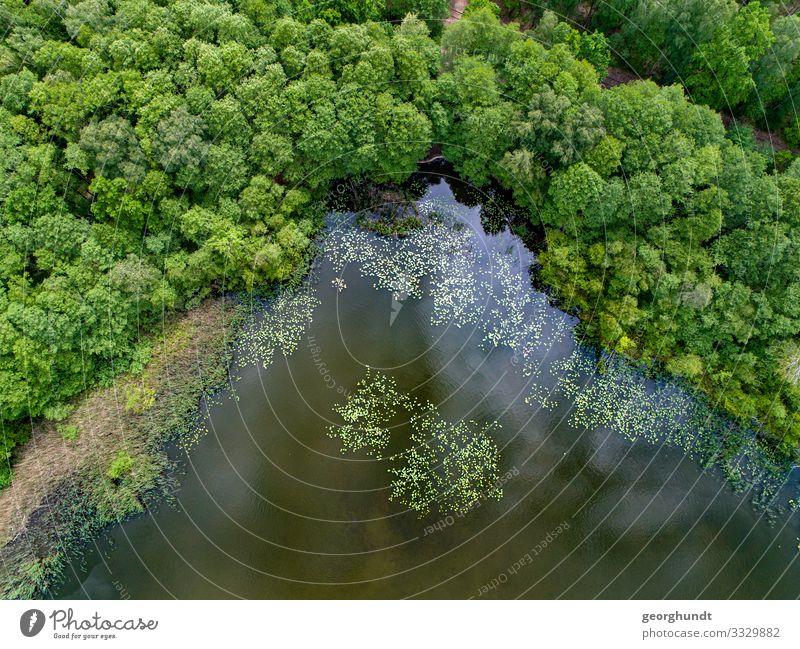 Waldpfützenecke Gesundheit Angeln Jagd Schwimmen & Baden wandern Umwelt Natur Landschaft Pflanze Tier Sommer Seeufer Flussufer Bucht Insel Teich blau grün