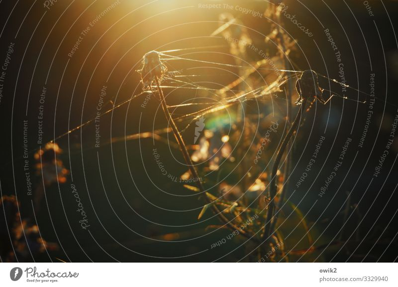 Wust Umwelt Natur Landschaft Sonnenlicht Pflanze Sträucher Wildpflanze Spinngewebe Garten leuchten Idylle Farbfoto Außenaufnahme Nahaufnahme Detailaufnahme