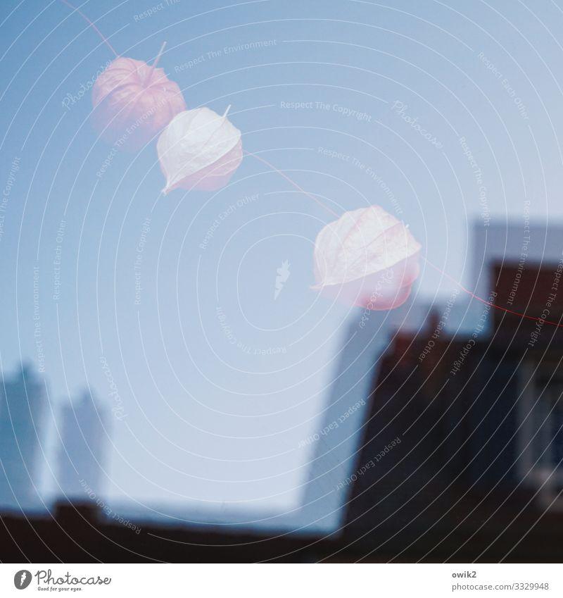 Am Schnürchen Wolkenloser Himmel Blüte Physalis Bautzen Stadtzentrum Altstadt Haus Dach Schornstein Fensterscheibe Glas hängen frei trocken Trockenpflanze