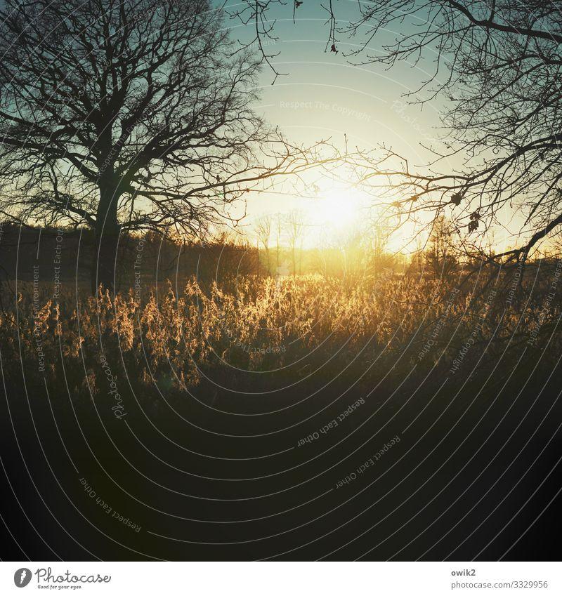 Lichterloh Umwelt Natur Landschaft Pflanze Wolkenloser Himmel Horizont Sonne Schönes Wetter Baum Sträucher Waldlichtung Sumpf leuchten Idylle Ferne