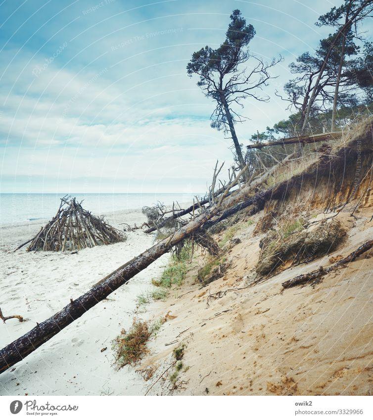 Tipi Umwelt Natur Landschaft Sand Wasser Himmel Wolken Horizont Herbst Schönes Wetter Pflanze Baum Sträucher Küste Ostsee Holz ruhig Idylle Ferne Erosion