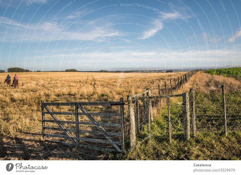 Hin reiten Reiten Arbeit & Erwerbstätigkeit Gaucho Landwirtschaft Forstwirtschaft androgyn 2 Mensch Landschaft Erde Himmel Wolken Horizont Sommer Schönes Wetter