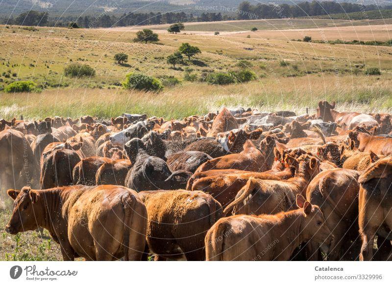 Sammelpunkt Natur Landschaft Pflanze Tier Sommer Baum Gras Sträucher Wiese Feld Wald Pampa Weide Grasland Steppe Nutztier Kuh Kuhherde Herde stehen warten