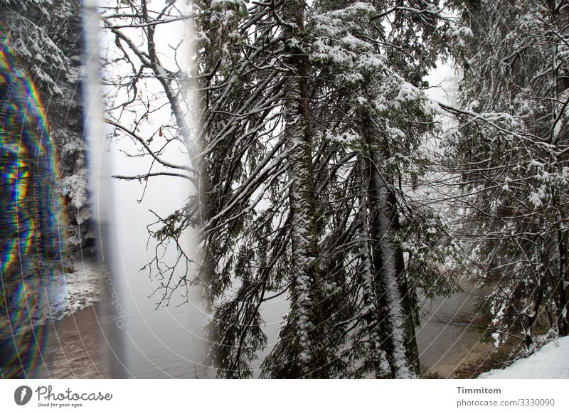 Eiszeit | Winterbäume Ferien & Urlaub & Reisen Umwelt Natur Pflanze Frost Schnee Baum Wald See Mummelsee kalt braun schwarz weiß Reflexion & Spiegelung Prisma