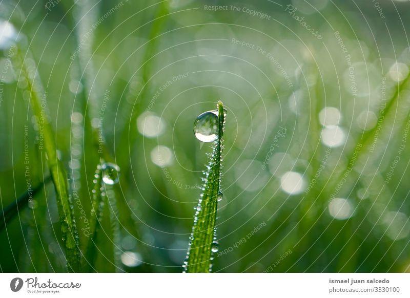 Regentropfen auf dem grünen Gras an regnerischen Tagen Pflanze Blatt Blätter Tropfen Wasser nass glänzend hell Garten geblümt Natur natürlich Laubwerk abstrakt