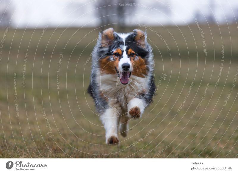 #Hundi Tier Haustier ästhetisch braun Winter Farbfoto Außenaufnahme