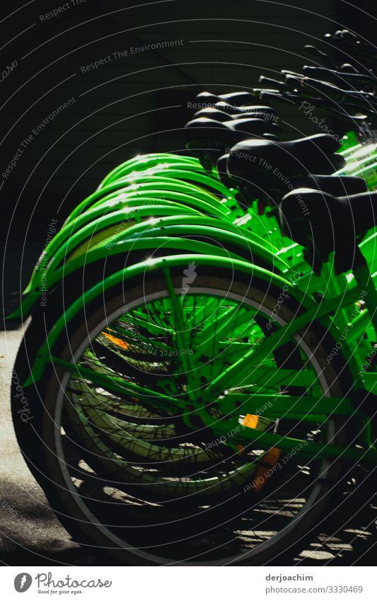 Fahrräder  alle in grün. Man sieht nur die Hinterräder bezw. die Sättel. Design Leben Fitness Sport-Training Fahrradfahren Umwelt Sommer Schönes Wetter
