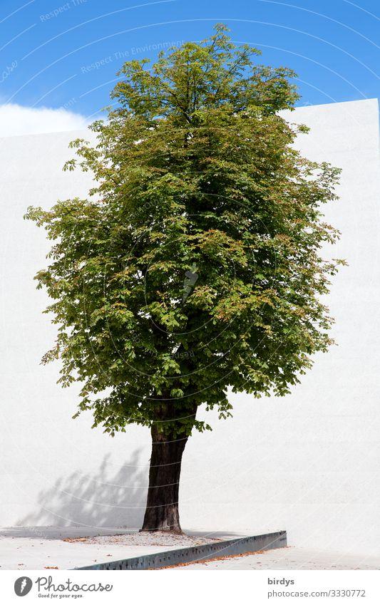 """denk mal """"Baum"""" Wolkenloser Himmel Sommer Klima Klimawandel Schönes Wetter Mauer Wand 1 Wachstum ästhetisch authentisch positiv Sauberkeit blau grün weiß"""