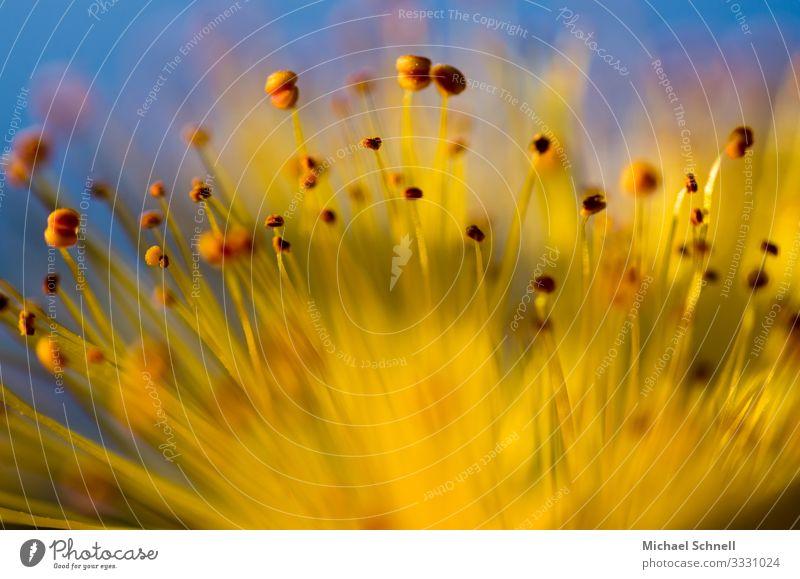 Kleine gelbe Blüte Natur Sommer Pflanze Blume Umwelt natürlich Glück Kitsch nachhaltig Optimismus