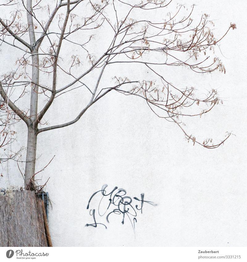 Filigraner Baum, Wand und Graffiti Berlin Haus Mauer Zeichen stehen grau bescheiden Erschöpfung bizarr Hoffnung Umwelt karg filigran kahl Gedeckte Farben