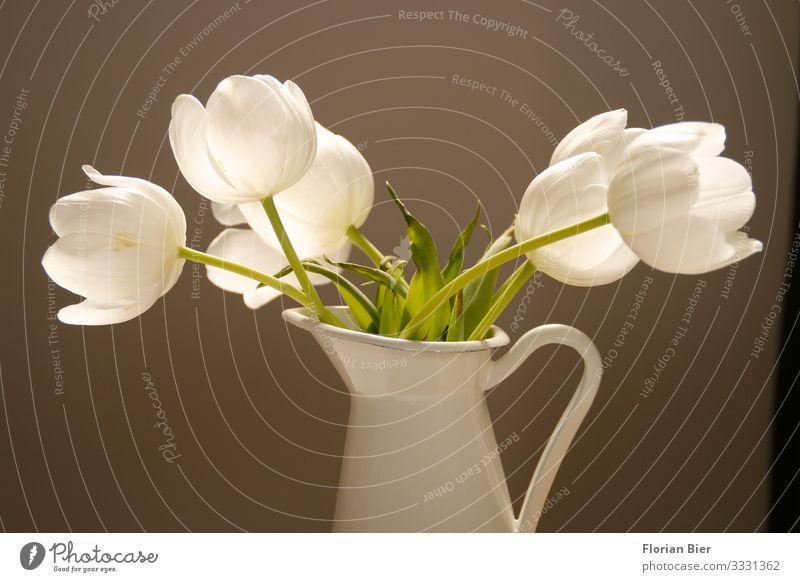 Stillleben Frühling Pflanze Tulpe Vase Metall Blühend Duft ästhetisch Gesundheit schön Glück Warmherzigkeit Freundschaft Zusammensein Romantik Begierde