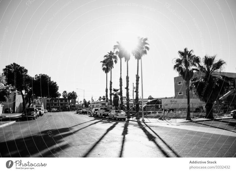 Straße mit Häusern und Autos Haus Sommer Architektur urban Gebäude Asphalt Landschaft Venice Beach USA Handfläche heimwärts Tag Kalifornien reisen Urlaub Resort