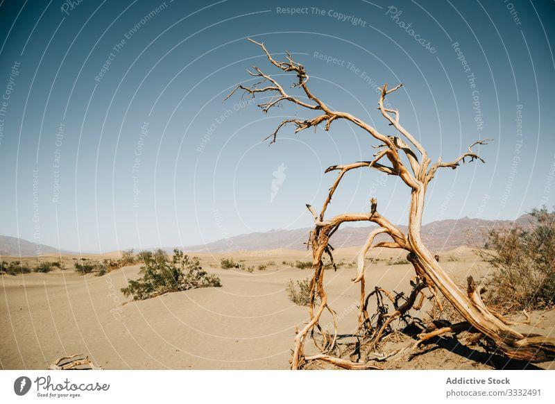 Blick auf Todesbaum und Büsche in der Wüste wüst Baum Düne Ansicht Landschaft Himmel tot trocknen Natur USA Reise Buchse reisen Tag Urlaub Sommer Zustand