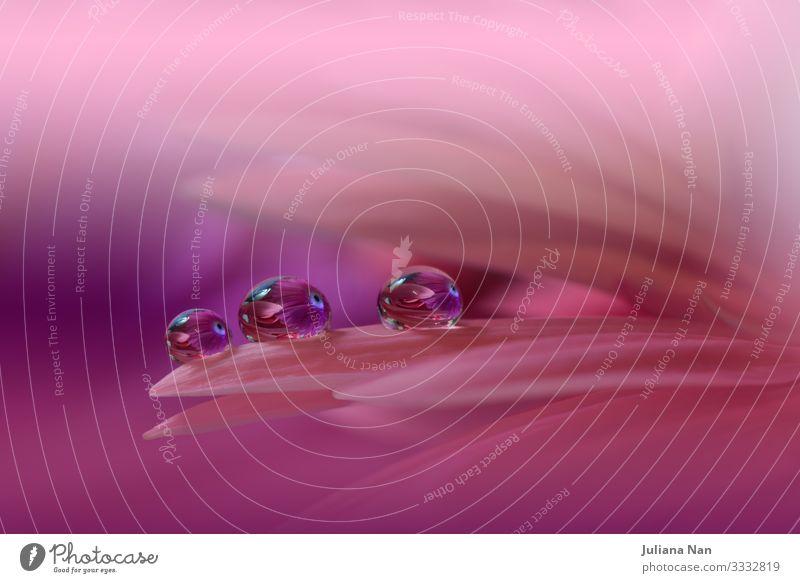 Wunderschöner Naturhintergrund.Florales Kunstdesign.Abstrakte Makrofotografie.Gerbera Gänseblümchen.Pastellblumen.Violetter Hintergrund.Kreative künstlerische Tapete.Feier,Liebe.Nahaufnahme.Fröhliche Feiertage.Kopierraum.
