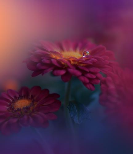 Natur Pflanze blau Farbe schön Wasser rot Blume Erholung ruhig Freude Lifestyle Liebe Glück Stil Kunst