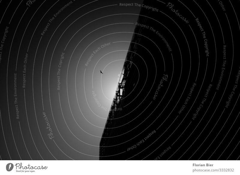 Ikarus Himmel Sonne Menschenleer Haus Fassade Dach Vogel beobachten fliegen ästhetisch dunkel eckig klein Stadt Tapferkeit selbstbewußt Wachsamkeit geduldig