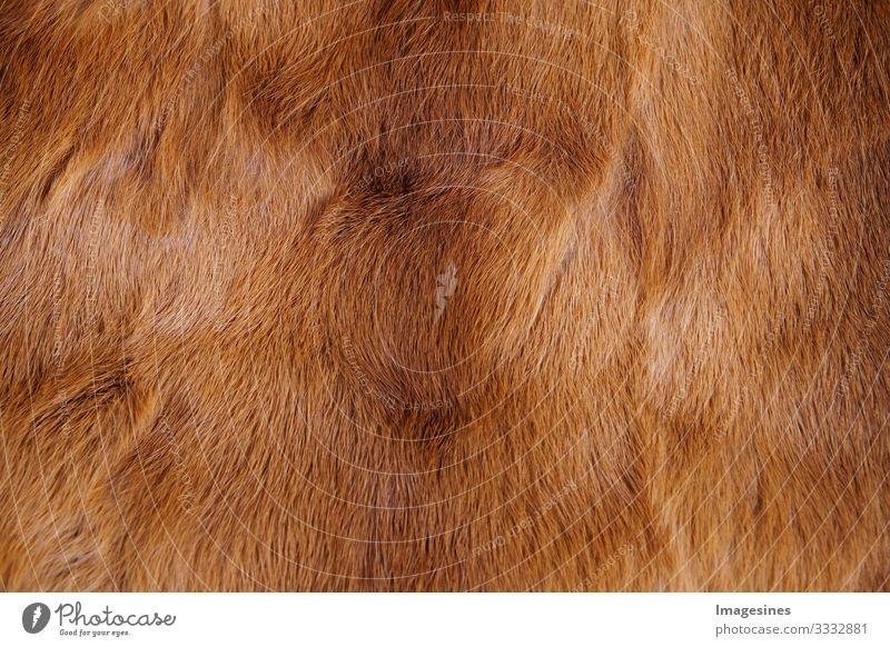 """Tierfell Hintergrund. Textur von Fell. Tierwelt Konzept und Stil. Texturen und Hintergründe. Nahaufnahme, voller Rahmen von Pelzmantel weich braun """"Tierfell"""