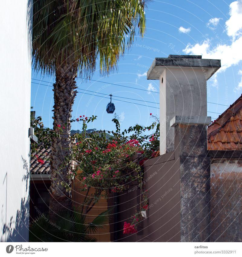 Funchal | Seilbahn nach Monte Portugal Madeira Altstadt Gondellift Aussicht Botanischer Garten Tourismus Ferien & Urlaub & Reisen Palme Schornstein Ferienhaus