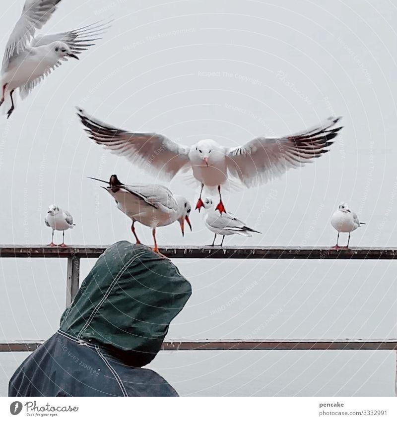 kopfstand Natur Winter Küste Seeufer Tier Wildtier Vogel Tiergruppe berühren fliegen Fressen Konkurrenz Möwenvögel Mann Kapuze Kopf füttern Geländer Bodensee