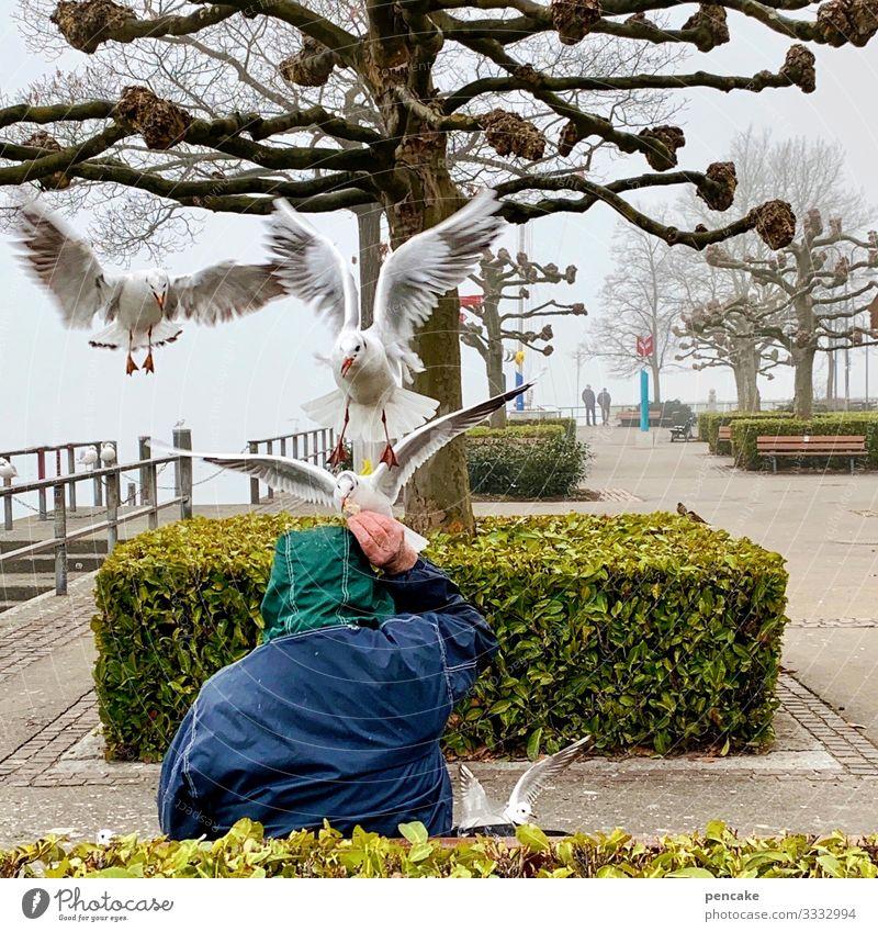 doppelter kopfstand Mensch Natur Wasser Landschaft Baum Tier Bewegung Spielen Vogel fliegen Freizeit & Hobby Park Kommunizieren Wildtier Tiergruppe Sträucher