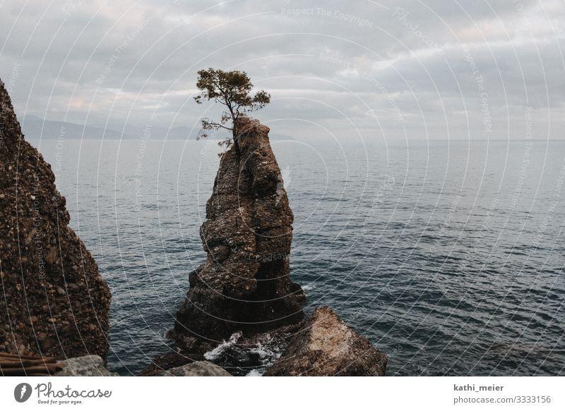 Einsamer Baum im Meer auf Felsen Küste Landschaft Natur Wasser Klippe Überleben Überlebenskampf Überlebenskünstler Schwierigkeiten schwierige Zeiten Hoffnung
