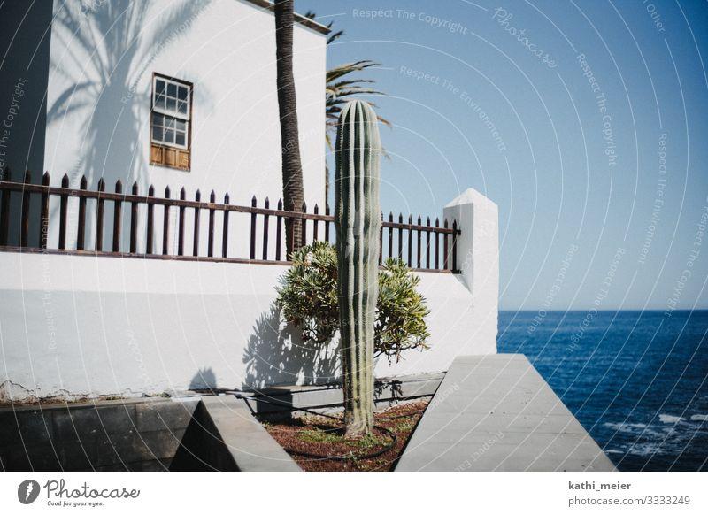 Er steht blau grün weiß Meer Haus ruhig Umwelt hell frisch Sex Insel Fröhlichkeit Schönes Wetter Warmherzigkeit Klima Platzangst