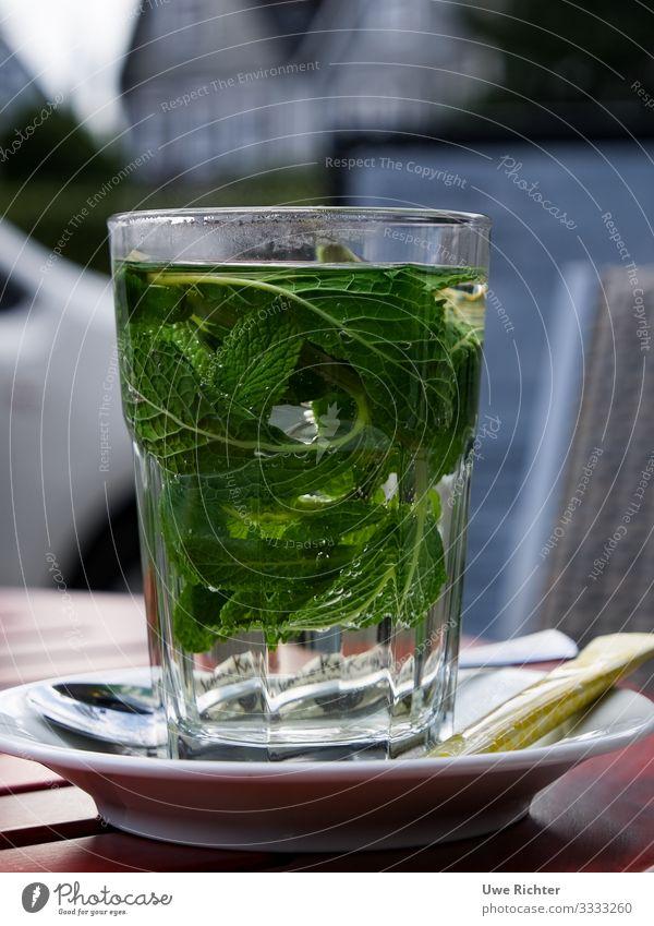 Frische Pfefferminze im Glas Lebensmittel Ernährung Bioprodukte Vegetarische Ernährung Getränk Heißgetränk Tee Stil Gesundheitswesen Minze Minzeblatt