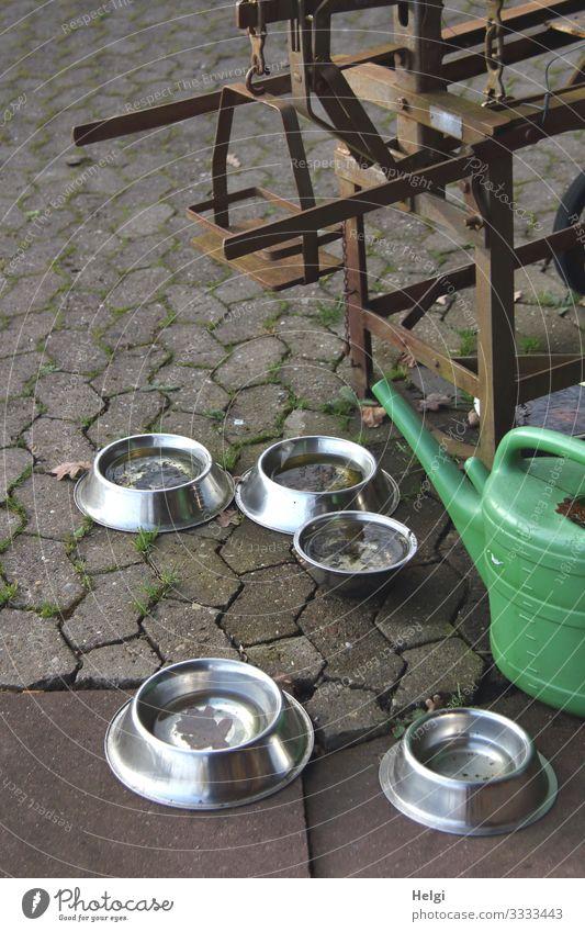 Napf mit Wasser  für Hunde und Gießkanne auf Pflastersteinen Fressnapf Stein Metall Kunststoff stehen trinken warten authentisch außergewöhnlich einfach