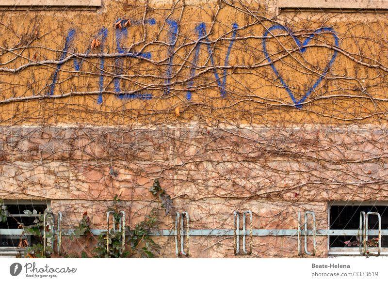 Mein Herz Freude Glück sprechen Natur Pflanze Efeu Mauer Wand Fahrradständer Zeichen wählen entdecken Kommunizieren Liebe schreiben außergewöhnlich