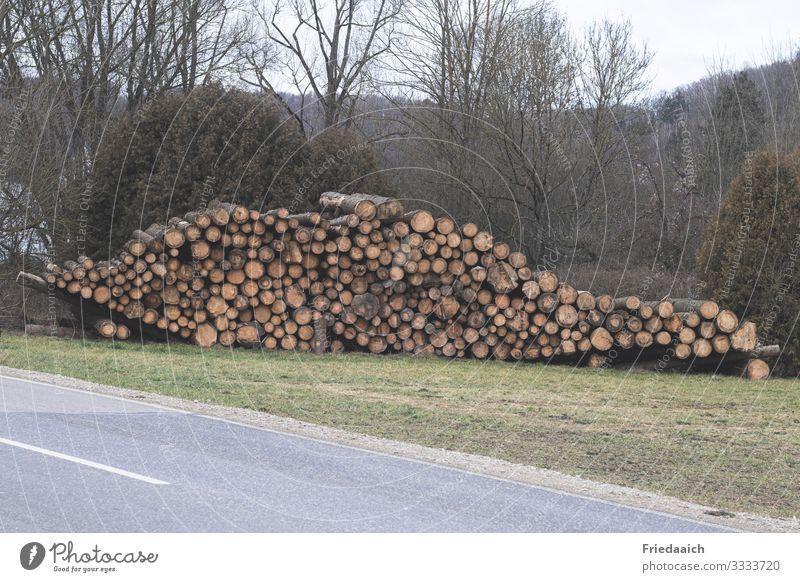 Baumstämme Natur Landschaft Nutzpflanze Baumstamm Holz Arbeit & Erwerbstätigkeit gebrauchen lang natürlich Originalität rund Lebensfreude Tatkraft Geborgenheit