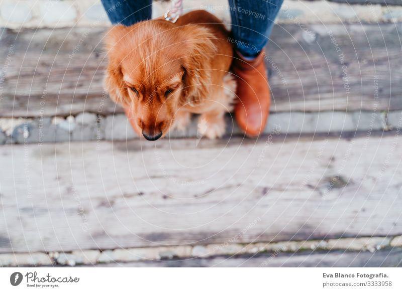 süßer Welpe Cockerspaniel-Hund im Freien und sein Besitzer. Ansicht von oben Frau Haustier Park Sonnenstrahlen Außenaufnahme Liebe Umarmen Lächeln Rückansicht