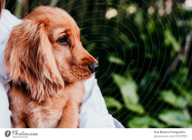 junge Frau und ihr süßer Cockerspaniel-Welpe im Freien Hund Haustier Park Sonnenstrahlen Außenaufnahme Liebe Umarmen Lächeln Rückansicht Küssen züchten