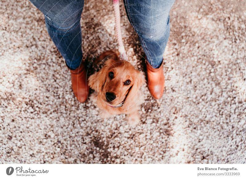 junge Frau und ihr süßer Cockerspaniel-Welpe im Freien. Ansicht von oben Hund Haustier Park Sonnenstrahlen Außenaufnahme Liebe Umarmen Lächeln Rückansicht