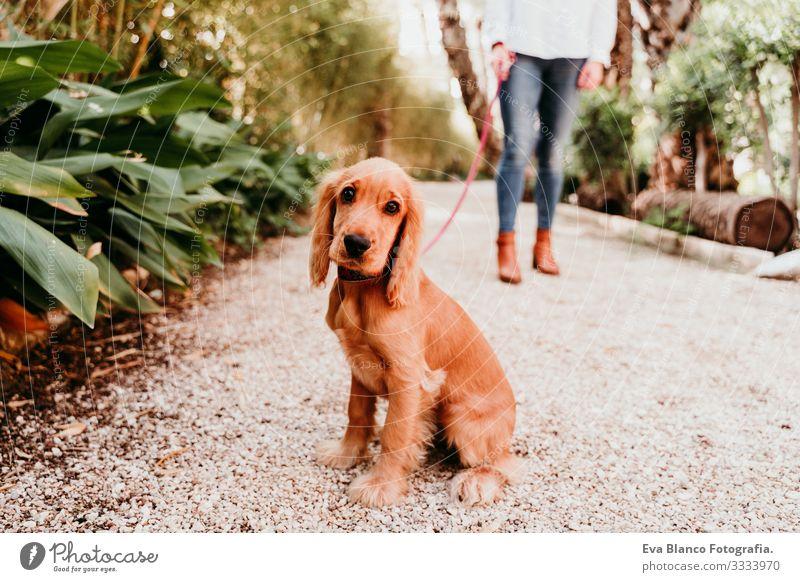 junge Frau, die mit ihrem niedlichen Cockerspaniel-Welpen im Freien spazieren geht laufen Hund Haustier Park Sonnenstrahlen Außenaufnahme Liebe Umarmen Lächeln