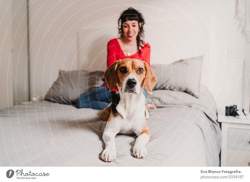junge schwangere Frau zu Hause mit ihrem Beagle-Hund heimwärts Bett Handy Technik & Technologie PDA erwartend Baby bauchfrei benutzend Internet WiFi schreibend