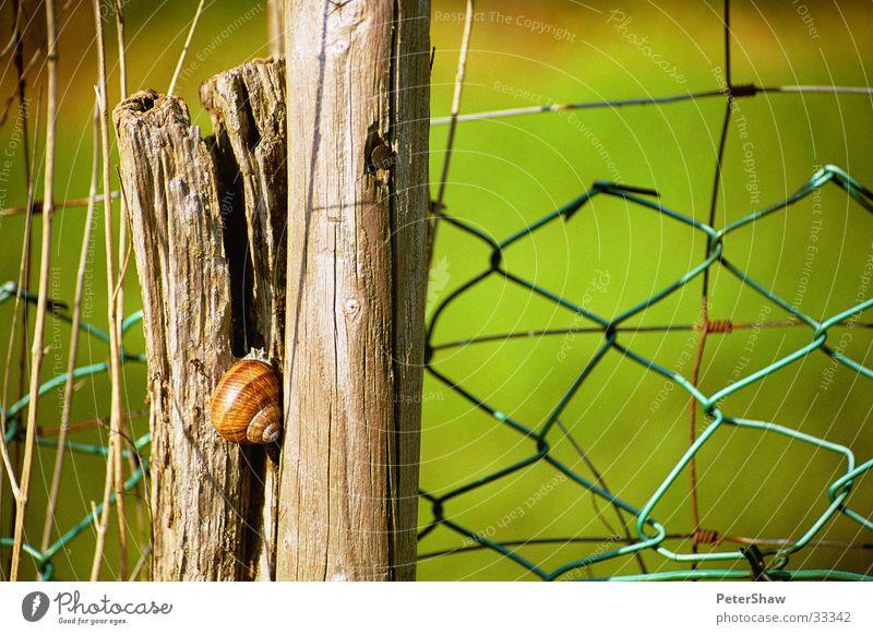 Schnecke Zaun grün Holz Schneckenhaus Detailaufnahme