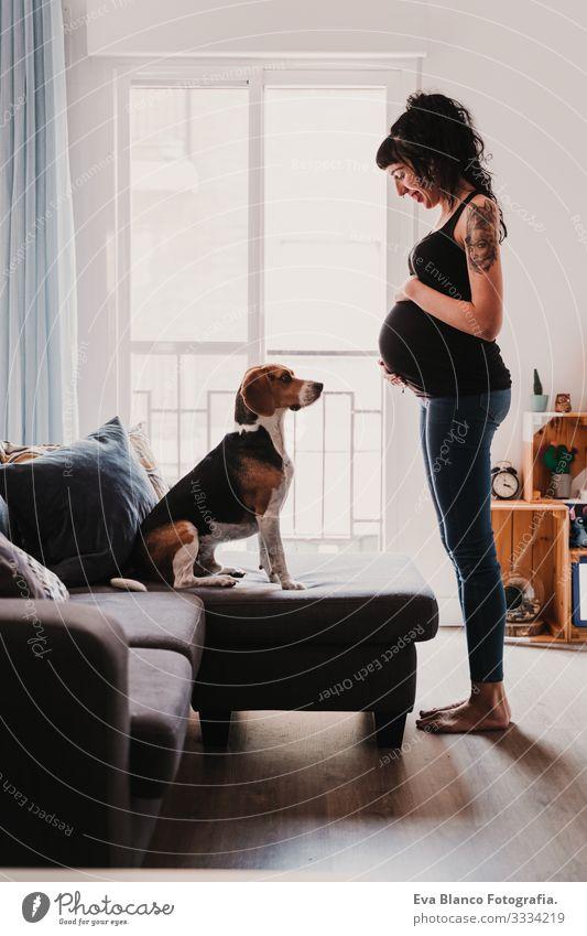 junge schwangere Frau zu Hause mit ihrem süßen Beagle-Hund heimwärts Haustier Leben heimisch
