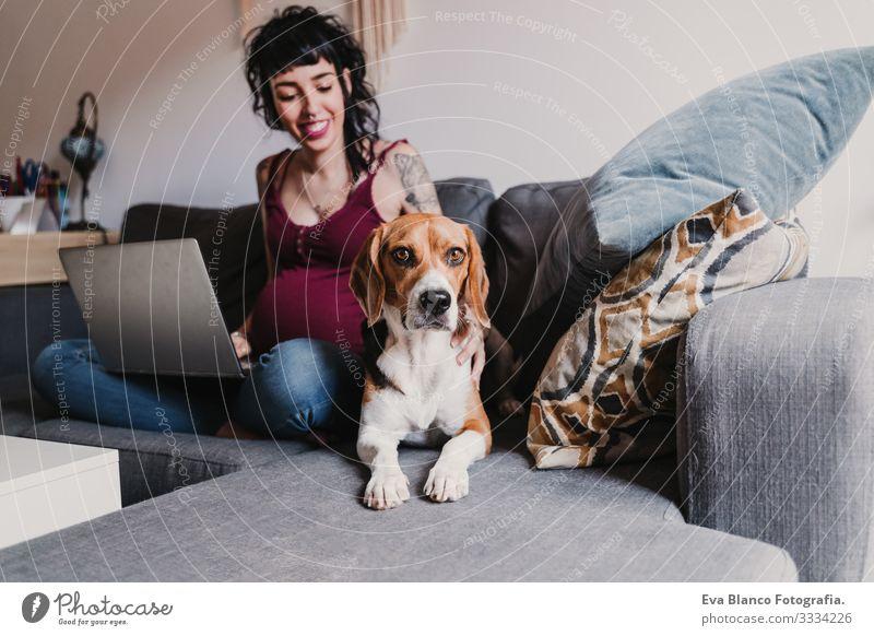junge schwangere Frau zu Hause, die am Laptop arbeitet. außerdem süßer Beagle-Hund Notebook Computer heimwärts Bett