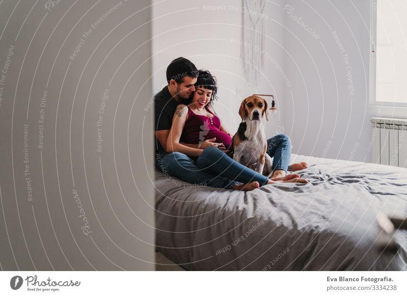 junges Paar zu Hause, das sich umarmt. Glückliche schwangere Frau lächelt. süßer Beagle-Hund daneben Liebe Eltern heimwärts Sofa Umarmen