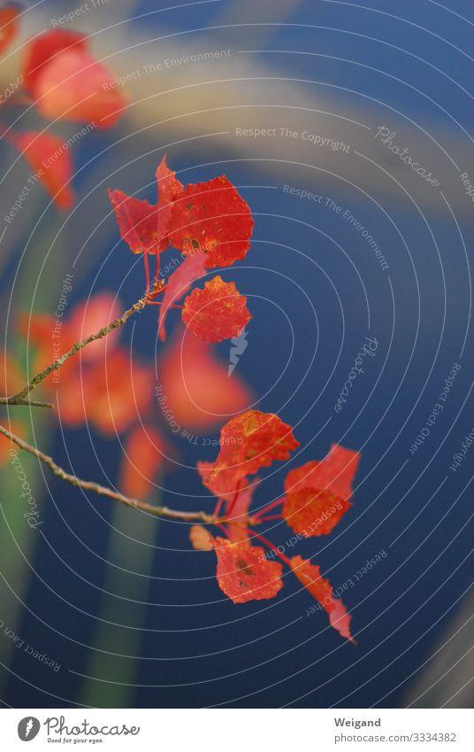 rot blau ruhig Trauerfeier Beerdigung Wasser atmen nass Spiritualität trösten Blatt Meditation Farbfoto Außenaufnahme Textfreiraum rechts Schwache Tiefenschärfe