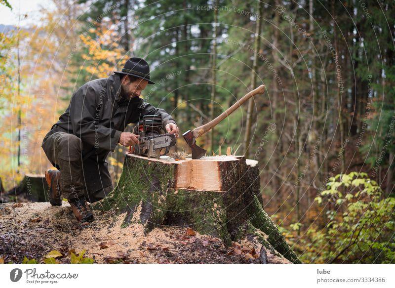 Waldarbeiter 2 Arbeit & Erwerbstätigkeit Beruf Landwirtschaft Forstwirtschaft Mann Erwachsene Umwelt Natur Baum Förster Holzfäller Baum fällen Waldaufseher