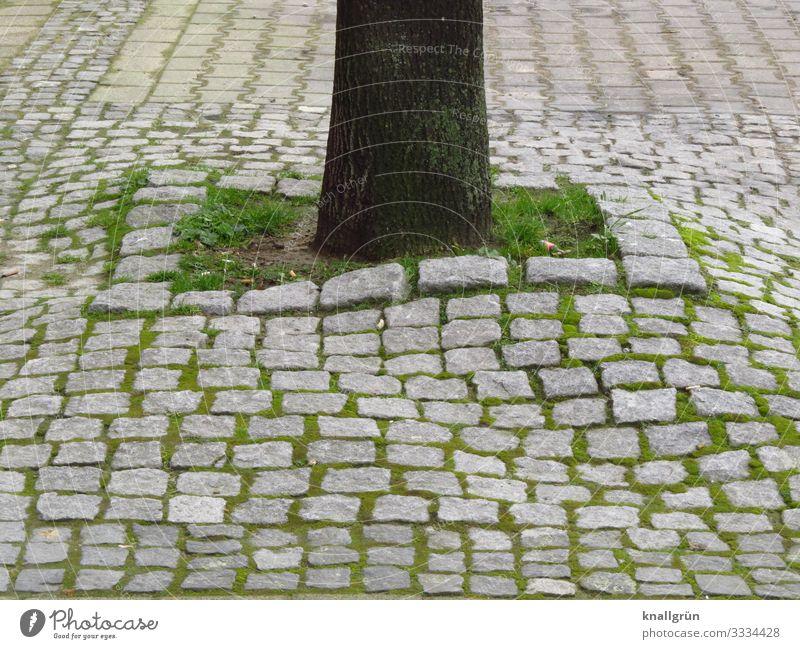Lebensraum Pflanze Erde Baum Stadt Stadtzentrum Kopfsteinpflaster Wachstum klein braun grau grün Natur Überleben Umwelt Gras Baumstamm Farbfoto Außenaufnahme