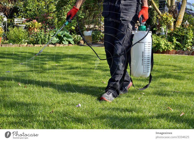 Sprühen von Pestiziden mit einem tragbaren Sprühgerät, um Unkräuter im Rasen zu beseitigen. Unkrautvertilgungsspray auf das Unkraut im Garten. Pestizideinsatz ist gesundheitsschädlich. Unkrautbekämpfungskonzept. Unkrautvernichter
