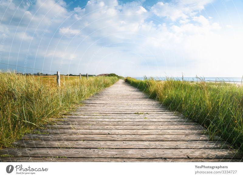 Hölzerner Fußweg und hohes Gras im Sonnenlicht. Sylter Landschaft Sommer wandern Schönes Wetter Küste Nordsee Brücke Wege & Pfade Perspektive Friesische Insel