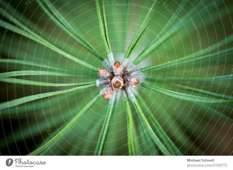 Pflanzenstrahlen Umwelt Natur Grünpflanze ästhetisch exotisch natürlich grün Optimismus Weisheit klug Kreativität ausbreiten Richtung Ehrlichkeit Toleranz