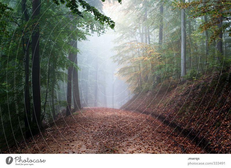 Morgens Ausflug Abenteuer Umwelt Natur Landschaft Sommer Herbst Klima Wetter Nebel Wald Wege & Pfade wandern frisch schön Stimmung mystisch Farbfoto