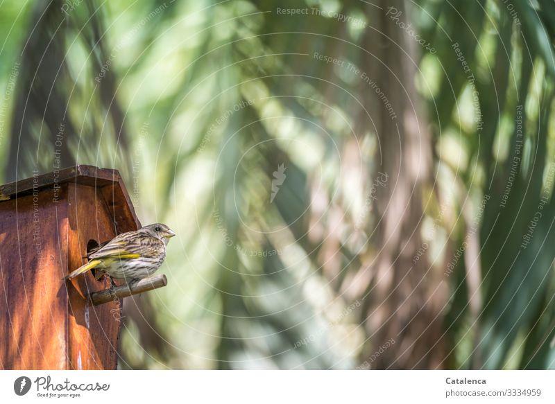 Ein Spatz sitzt vor dem Vogelhaus unter Palmblätter Tier Tierporträt Wildtier Singvogel Sperling Pflanze Palme Palmblatt Braun Orange Grün sitzen beobachten Tag