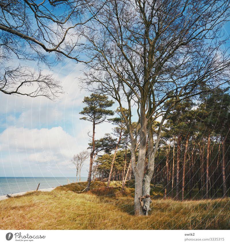 Verzweigt Umwelt Natur Landschaft Pflanze Wasser Himmel Wolken Horizont Herbst Schönes Wetter Baum Gras Sträucher Windflüchter Küste Holz groß hoch viele Idylle